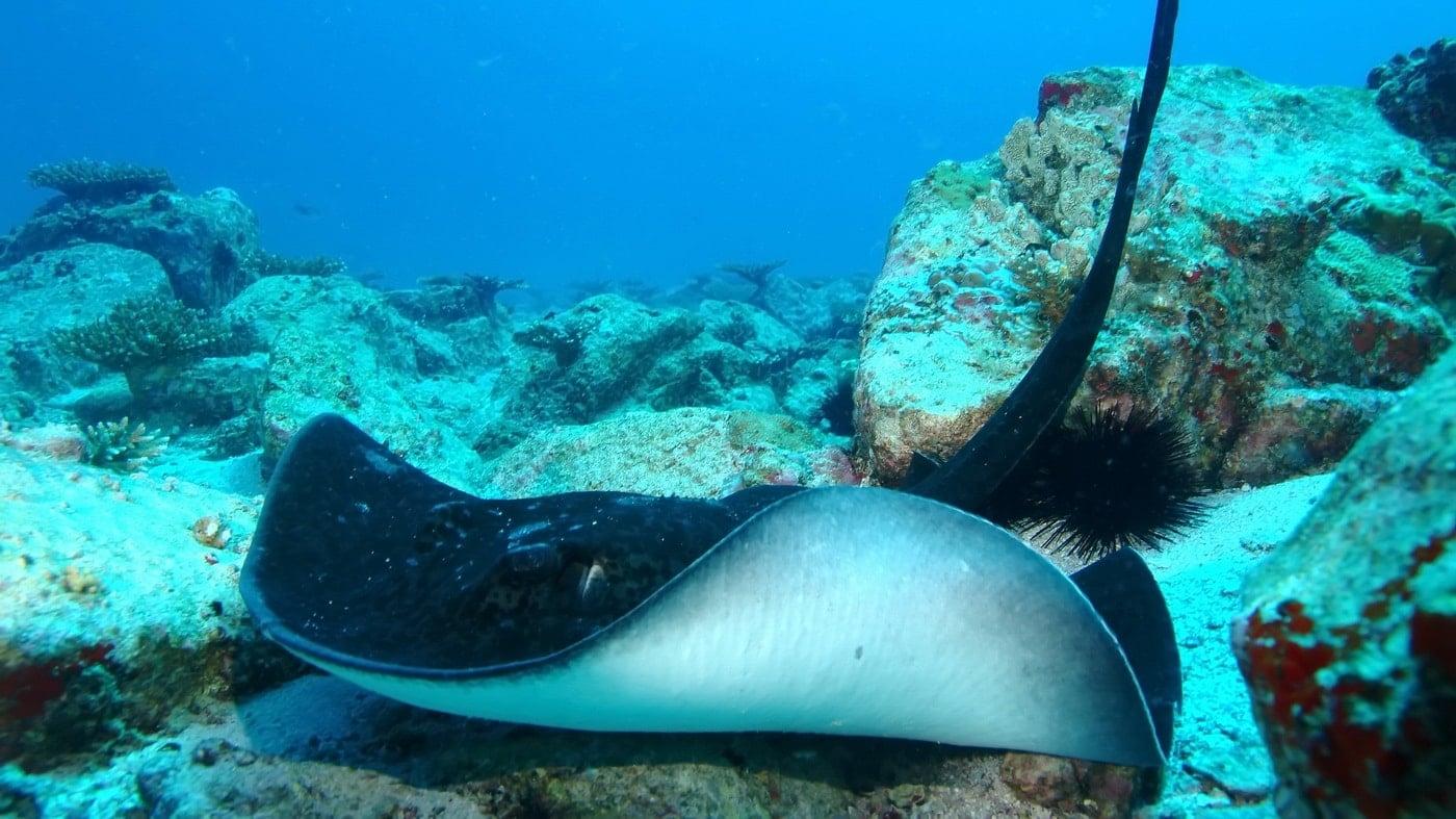 Seychellen Tauchspots