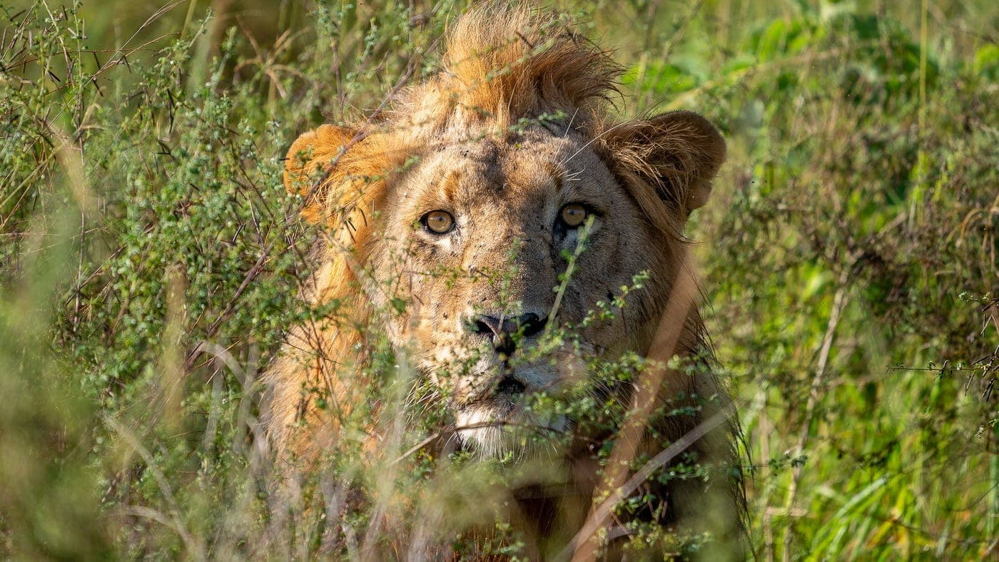 Magashi Camp / Ruanda (c) Wilderness Safaris / Dana Allen