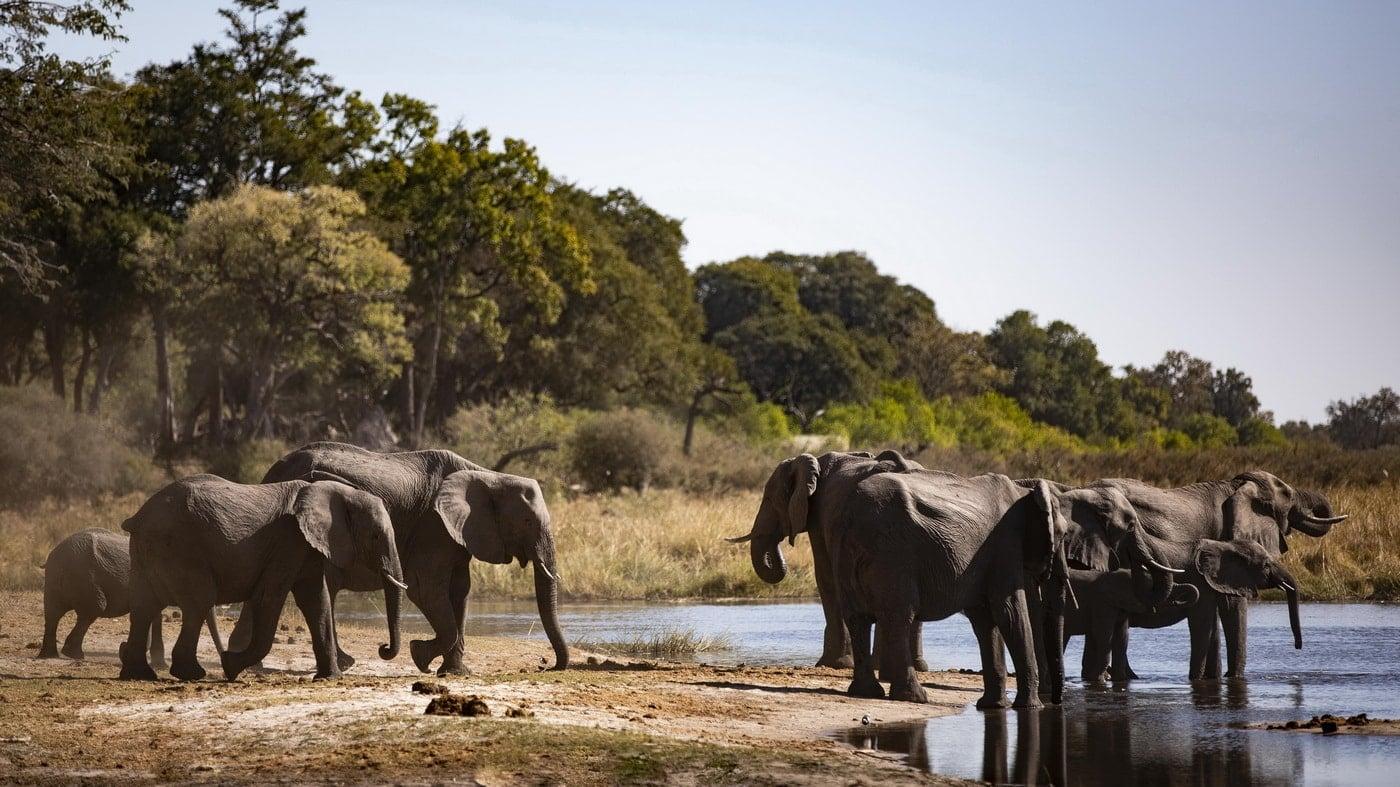 Kings Pool Camp / Botswana (c) Wilderness Safaris / Crookes & Jackson