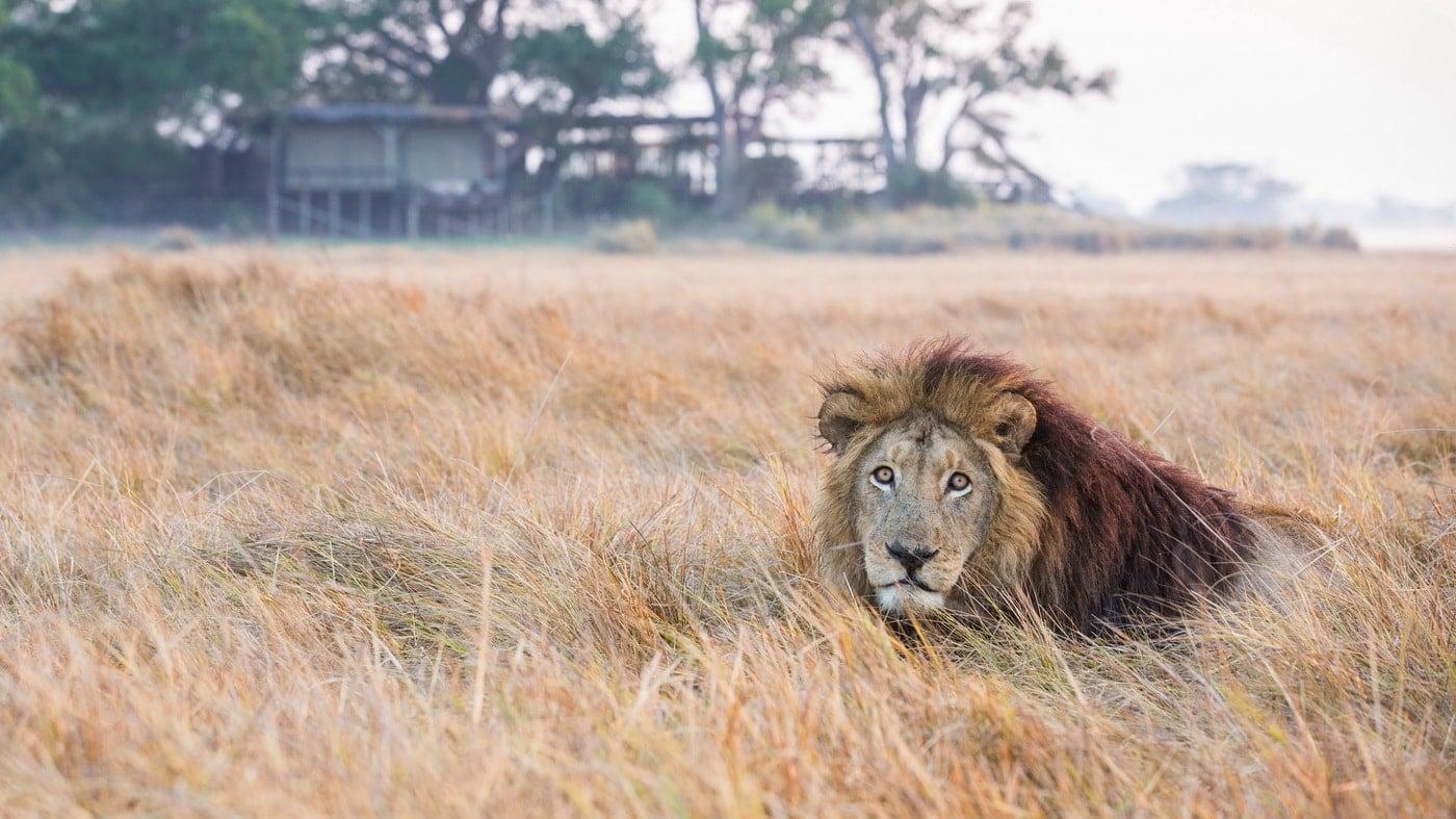 Shumba Camp / Sambia (c) Wilderness Safaris / Will Burrard