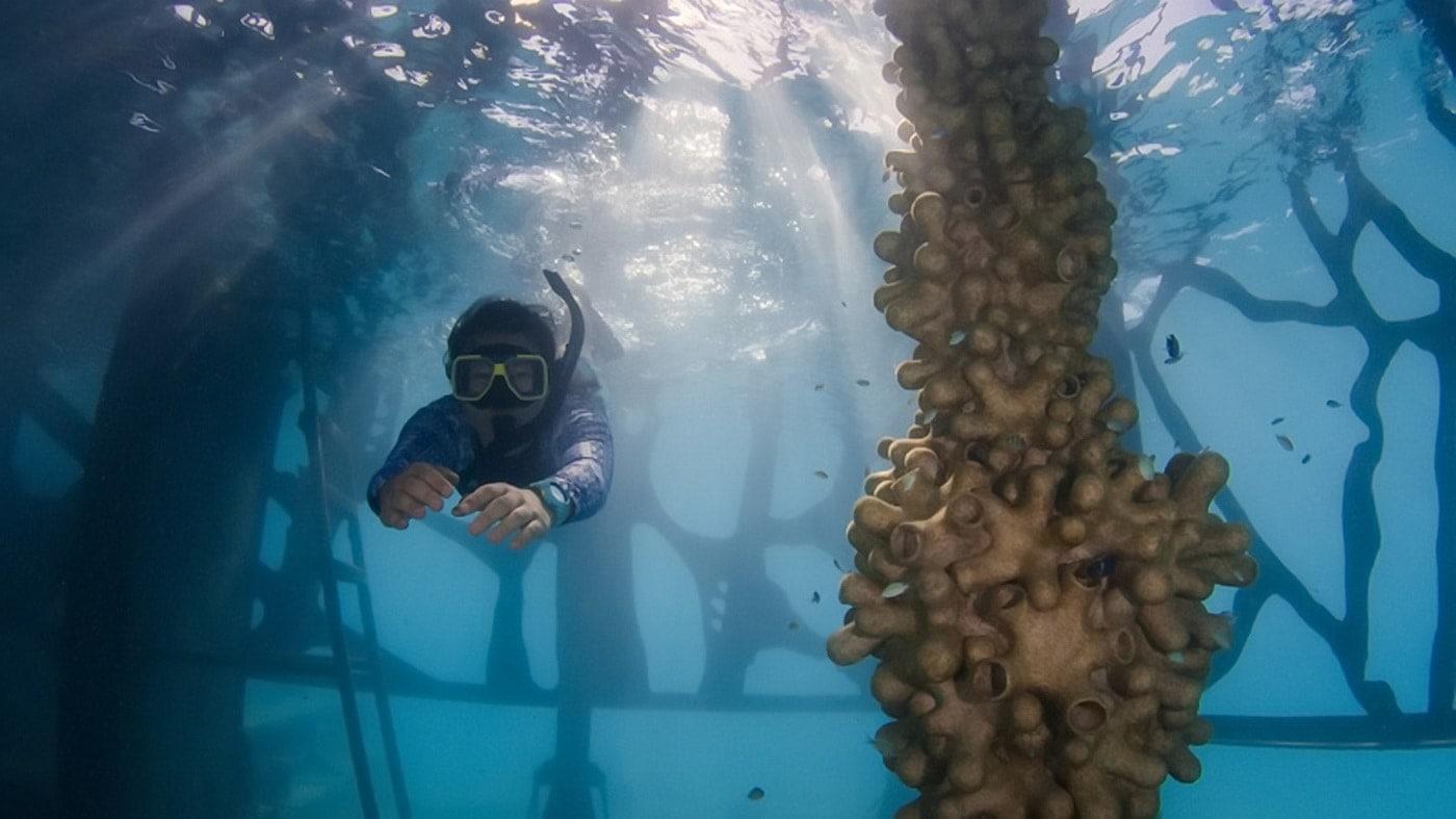 Fairmont Maldives Unterwasser-Museum