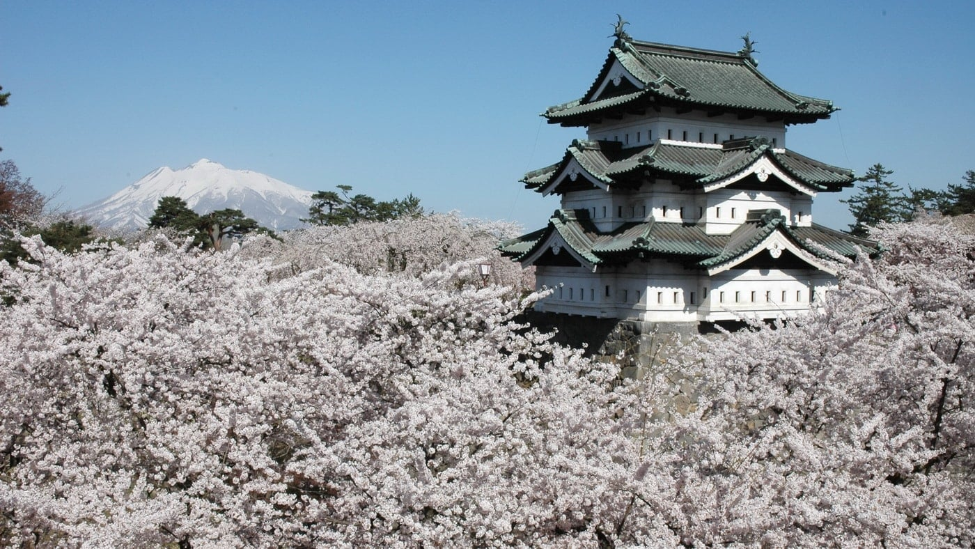 Japan Kirschblüte