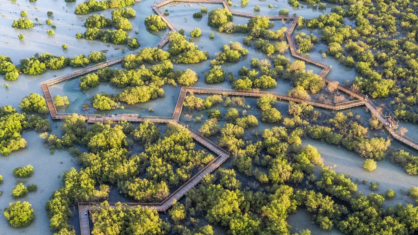 Abu Dhabi Mangrovenwälder