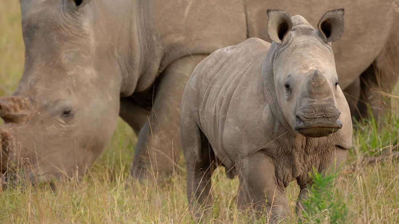 Safari in Südafrika (c) andbeyond