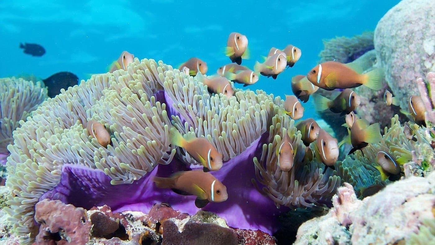 Malediven Korallenriffe