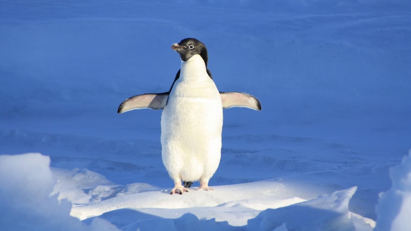 Welt-Pinguin-Tag