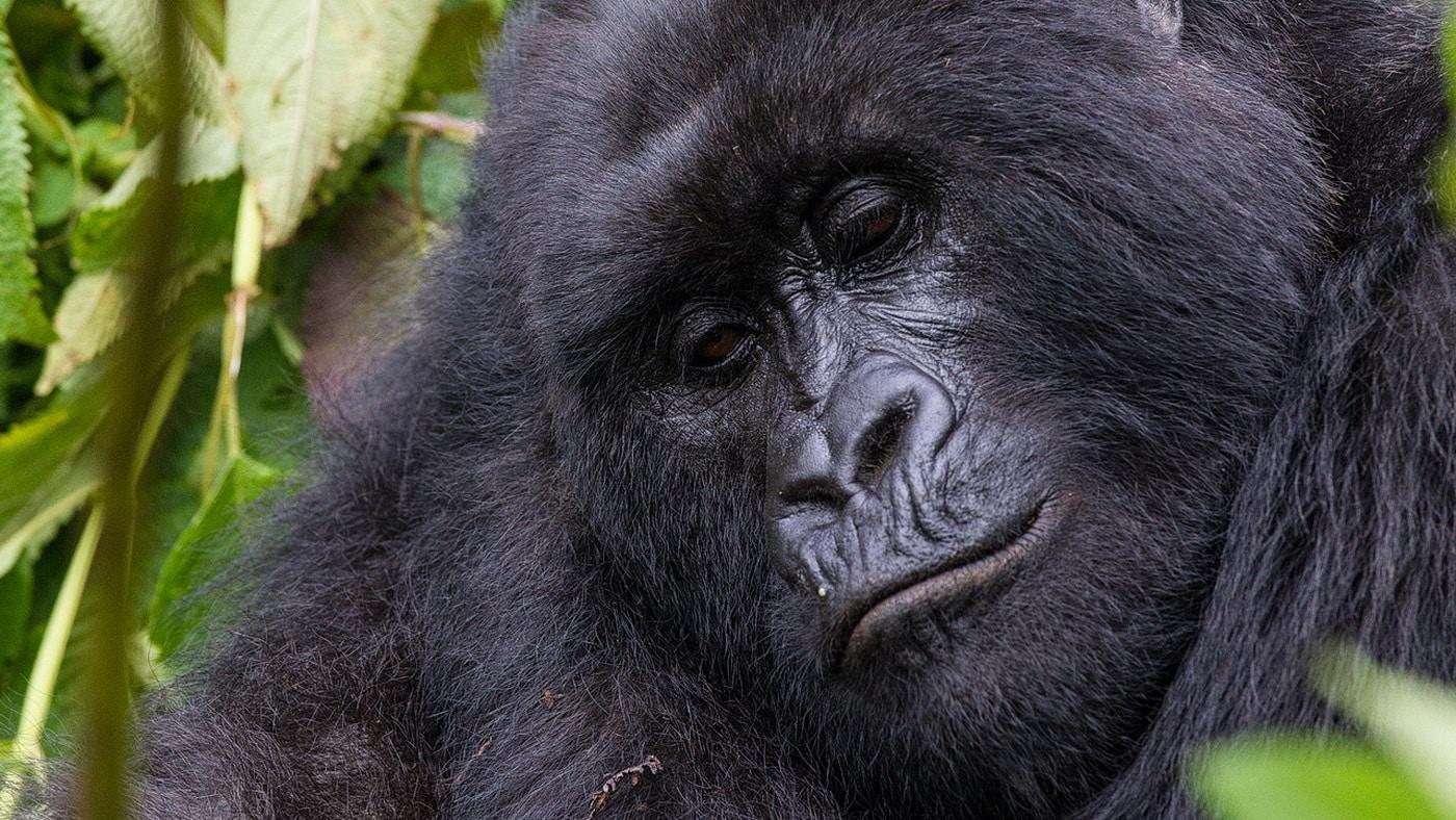Bisate Lodge / Ruanda (c) Wilderness Safaris / Caroline Culbert