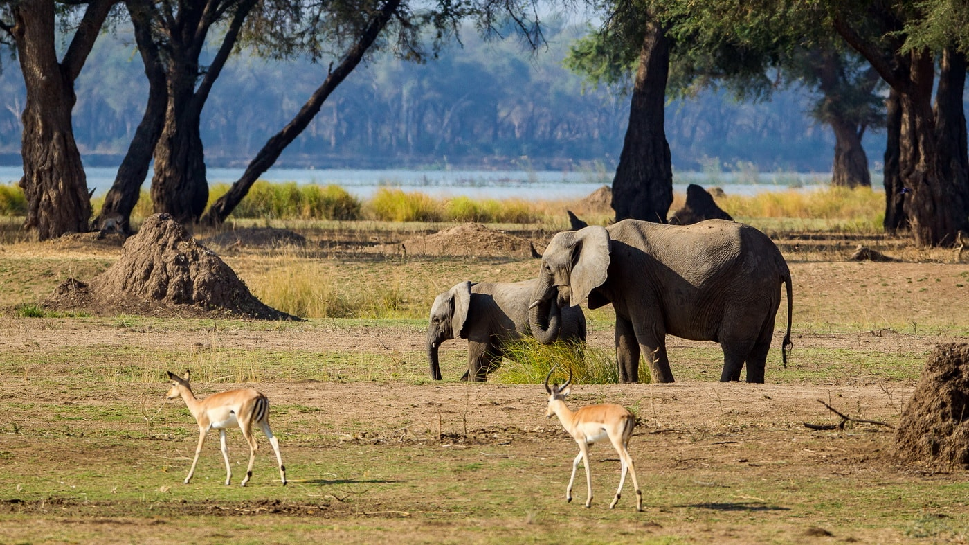 Chikwenya Camp / Simbabwe (c) Wilderness Safaris / Ruth & Kyle de Nobrega