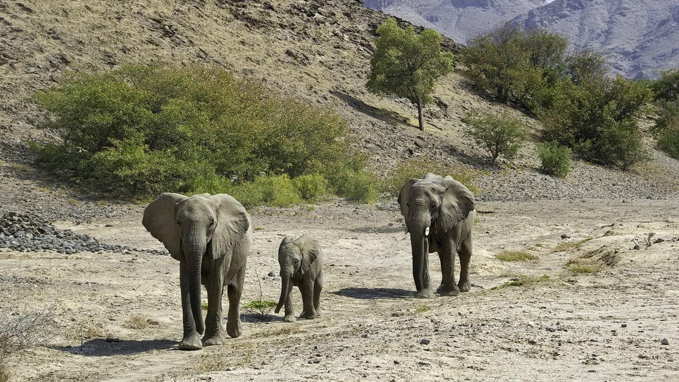 Hoanib Skeleton Coast Camp / Namibia (c) Wilderness Safaris / Caroline Culbert