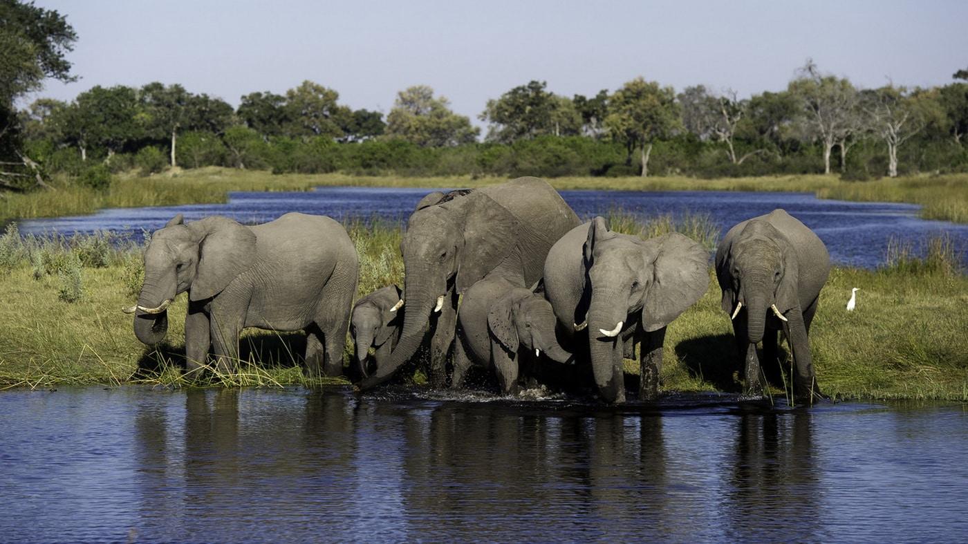 Linyanti Wildlife Reservat / Botswana (c) Wilderness Safaris